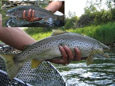August Fly Fishing
